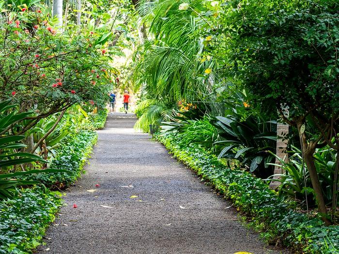 Botanical Garden, Puerto de la Cruz, Tenerife