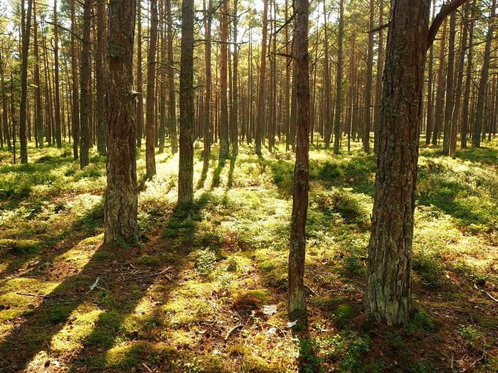 Woods on Sandhamn Island in the Stockholm Archipelago, Sweden