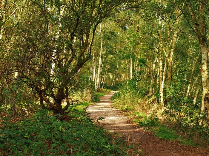 Path through the woods at Fairburn Ings, Yorkshire, England