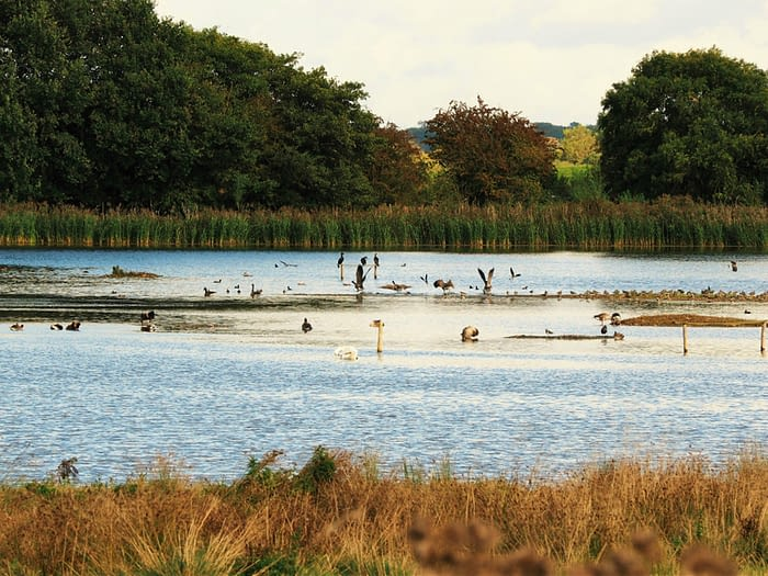 Birds on a lake at Staveley Nature Reserve, North Yorkshire, England