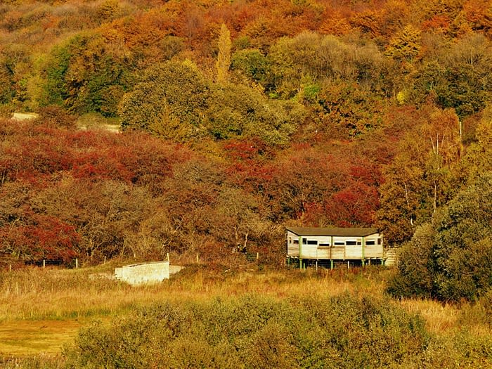 Bird hide in Fairburn Ings Nature Reserve, Yorkshire, England, surrounded by autumn foliage