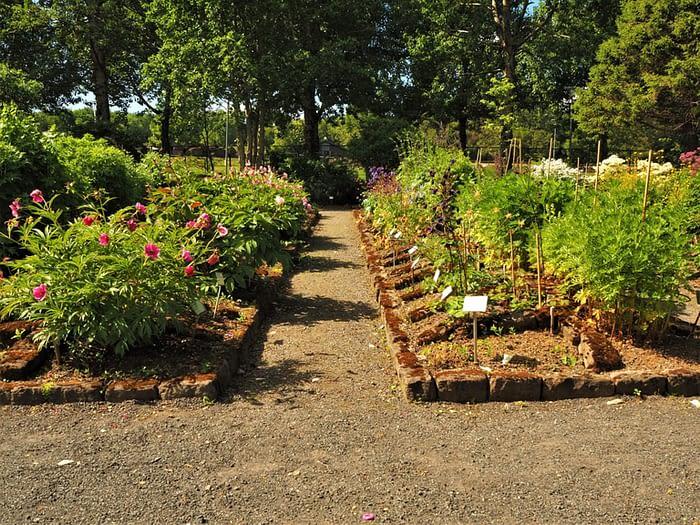Flower beds in Reykjavik Botanic Garden, Iceland