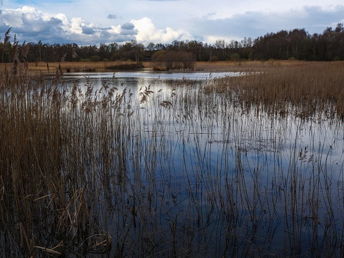 Reeds and wetlands at Potteric Carr, South Yorkshire, England