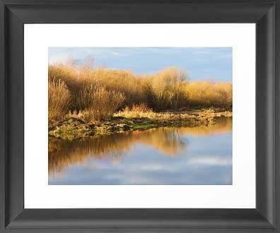 Framed Wheldrake