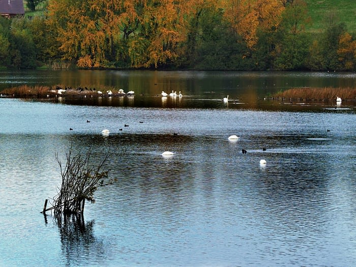 Birds on a lake at the RSPB Fairburn Ings reserve, Yorkshire, England
