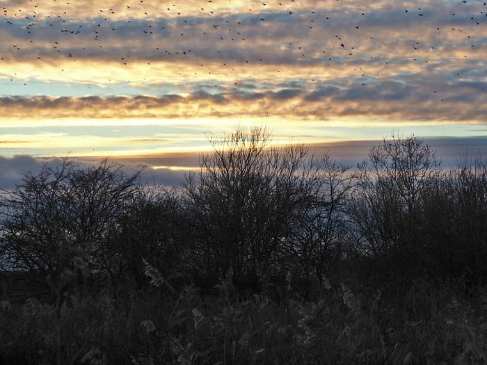 Sunset at Blacktoft Sands Nature Reserve, East Yorkshire, with a flock of fieldfares