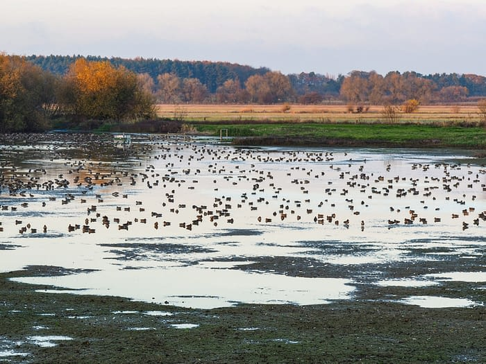 Seasonal flooding at Wheldrake Ings nature reserve, North Yorkshire, England