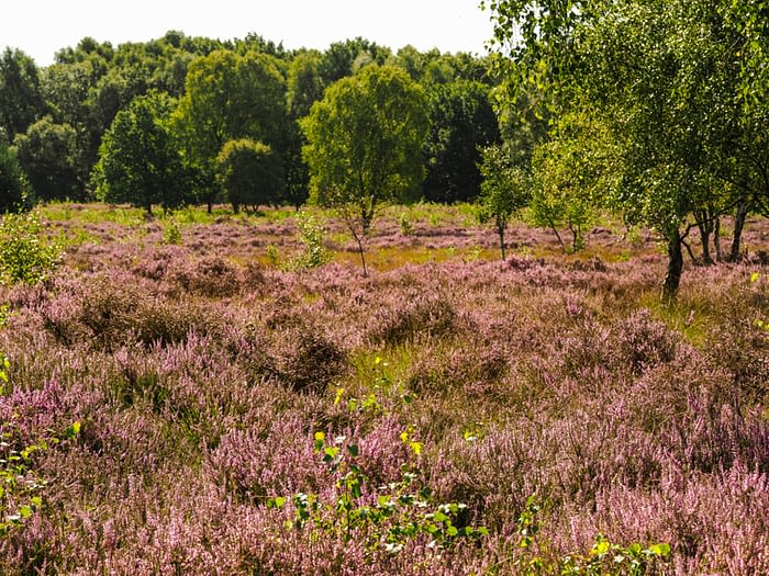 Skipwith Common National Nature Reserve, North Yorkshire, England